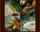 Jouer gratuitement à Puzzle Animal